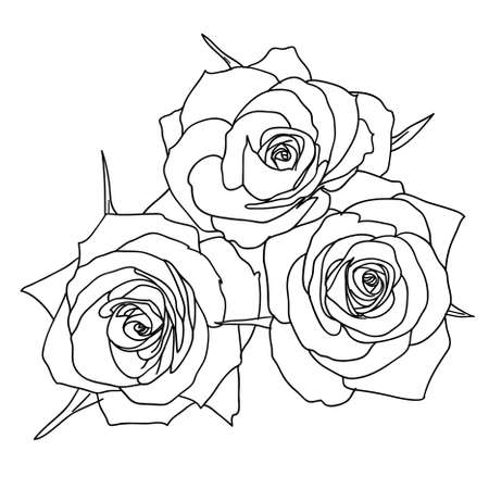 outline drawing: Three Roses in hand drawn style