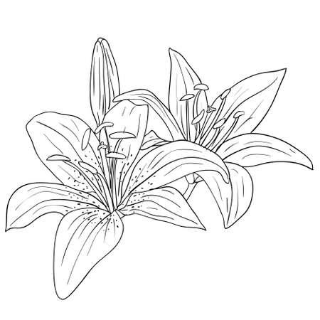 creative arts: floral design element and hand-drawn , vector illustration Illustration