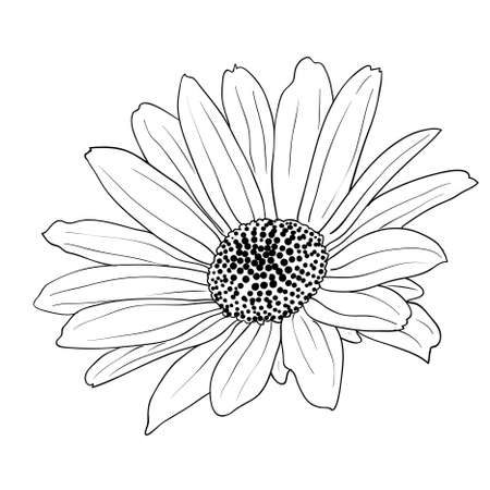 floral design element and hand-drawn , vector illustration Vector