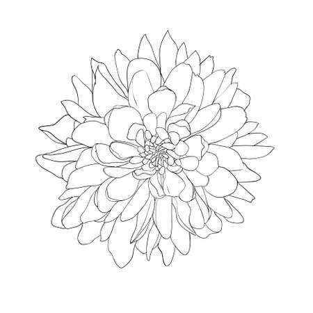 floral design element and hand-drawn , vector illustration Illustration