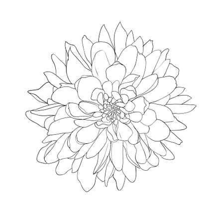 creative arts: floral design element and hand-drawn , vector illustration Illustration