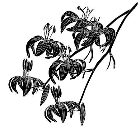 abloom: flor de lirio de vector aislada sobre fondo blanco