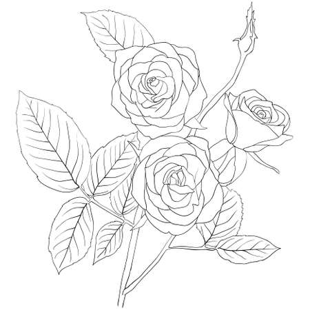 hand drawing illustration of a  bouquet of roses  Stock Vector - 9346655