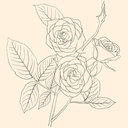 hand drawing illustration of a  bouquet of roses  Vector