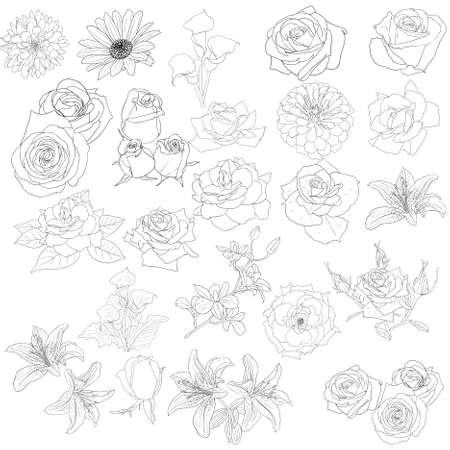 Set of  in hand drawn style roses Illustration