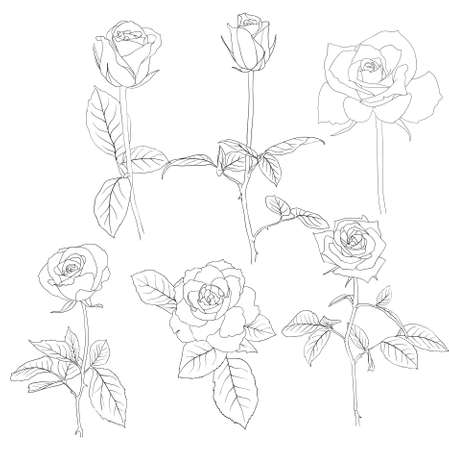 Set of in hand drawn style roses.  illustration. Vector