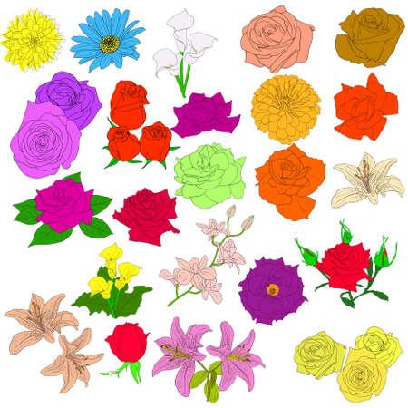 Conjunto de rosas de estilo dibujada a mano. Ilustración de vector EPS 10. Ilustración de vector