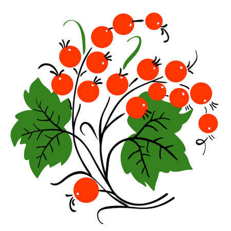 Bunch of red currant. Ripe berry. Vector Vector