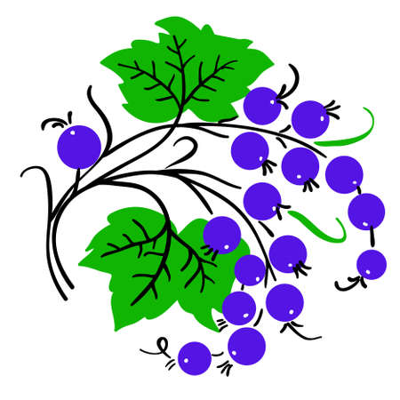 Bunch of red currant. Ripe berry. Vector Illustration