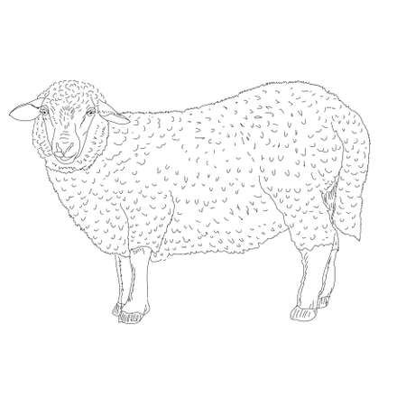 sheep painted by hand Vector