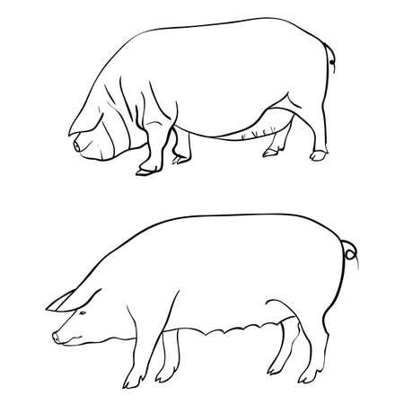 Pen drawing depicting a pig Vector