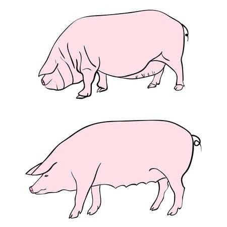 Pen drawing depicting a pig Stock Vector - 10960832
