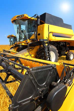 cosechadora: Cosechadora en un campo de trigo con un cielo azul
