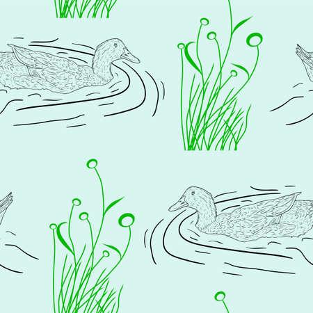 mallard: seamless background, Wild duck. Hand-painted vector illustration.
