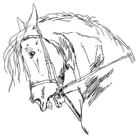 sketch: Vector versie. Zwart paard silhouet op wit wordt geïsoleerd voor het ontwerp. Stock Illustratie