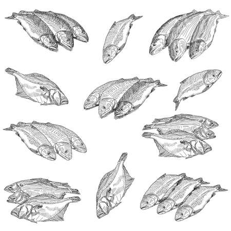 Set fresh sea fishes lie nearby on a white background Vector