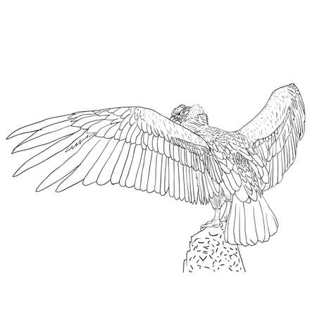 outspread: Vulture with outspread wings. Vector illustration.
