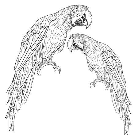 periquito: Guacamayos. Ilustraci�n vectorial.