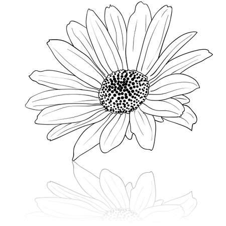 hape: vettoriale mano disegnato illustrazione