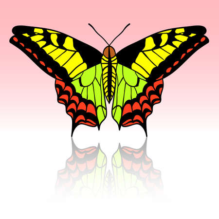 Beautiful tropical butterfly. Vector illustration. Vector