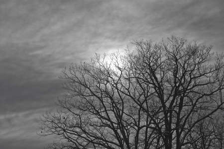 cloud scape: night moon shines through the clouds and trees. Stock Photo