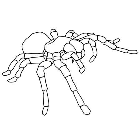 Tattoo spider tarantula on Blom background Vector