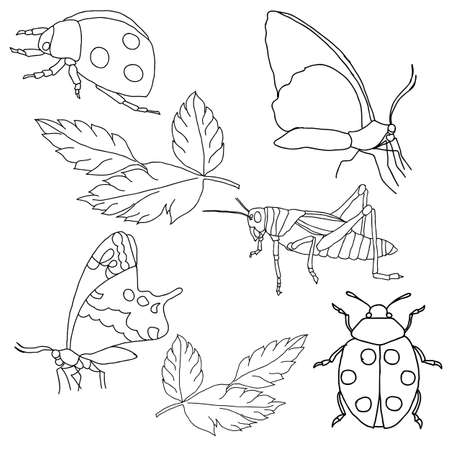 Set of insects on a white background.