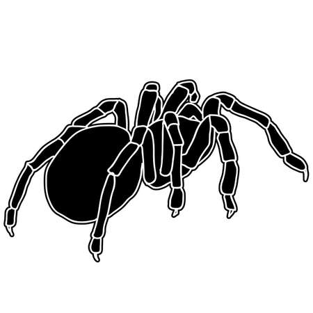 black widow: Tattoo of black widow isolated on white background.