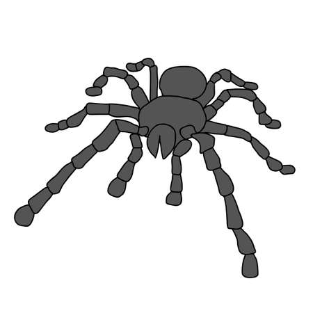 crawling animal: Tattoo of black widow isolated on white background.