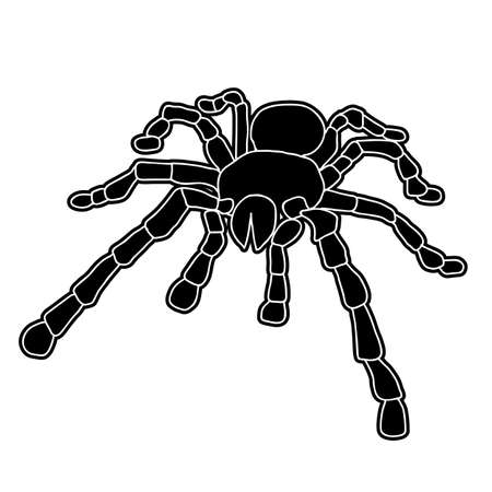 Tattoo of black widow isolated on white background. Stock Vector - 11930926