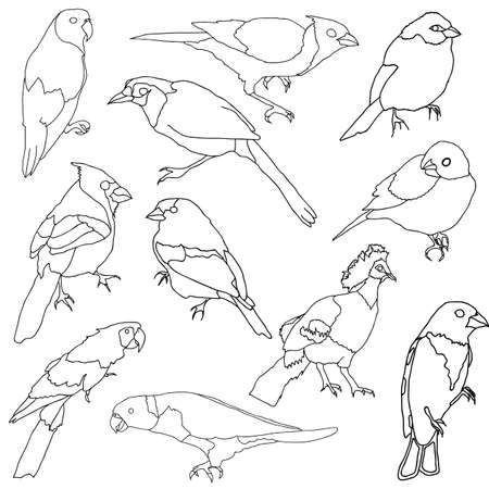 finch: Vector set of different species of birds. Illustration