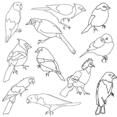 Vector set of different species of birds. Stock Vector - 11930933