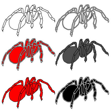 Set tattoo of black widow isolated on white background. Vector