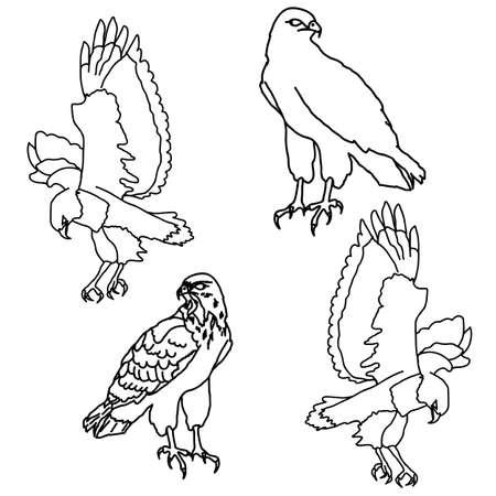 Eagles symbols and tattoo illustration. Vector