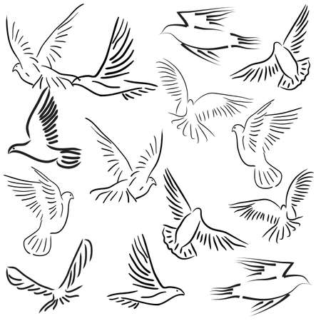 spread wings: Concept of love or peace. Set of white vector doves.