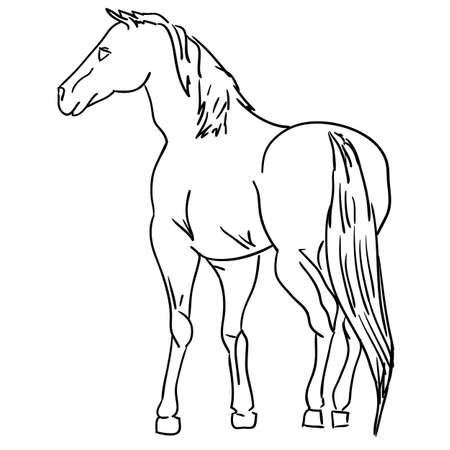 harness: Vector version. Black horse silhouette isolated on white for design. Illustration