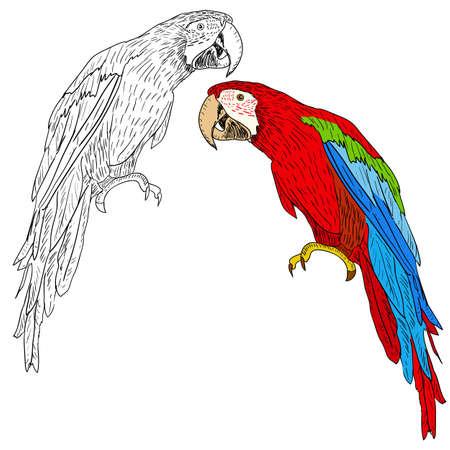Guacamayos. Ilustración del vector.