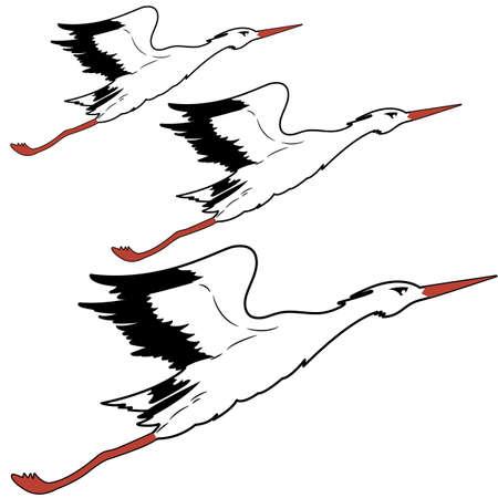 White Stork in flight  illustration  Vector