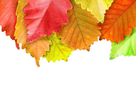 Autumn leaves frame over white for your text photo