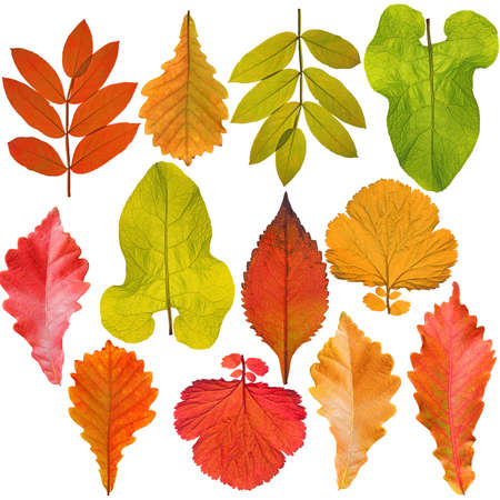 collection of tree leaves isolated on white background photo
