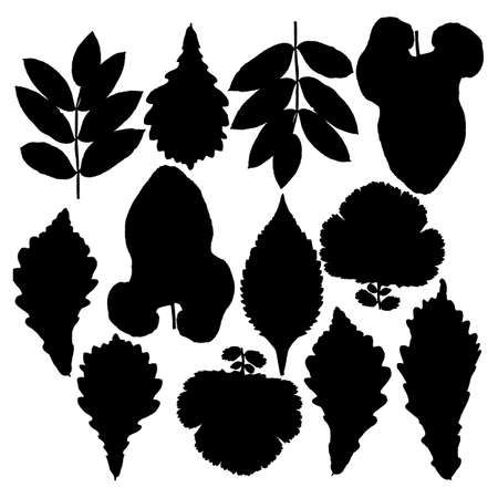 mountain ash: Set of silhouettes of leaves. Oak, mountain ash, birch, aspen,  poplar and hawthorn. Isolated on white.