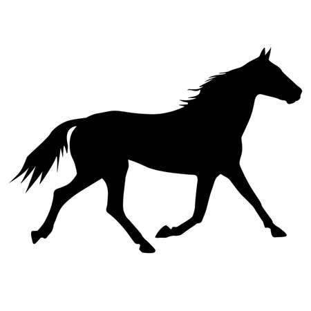 purebred: silhouette of horse