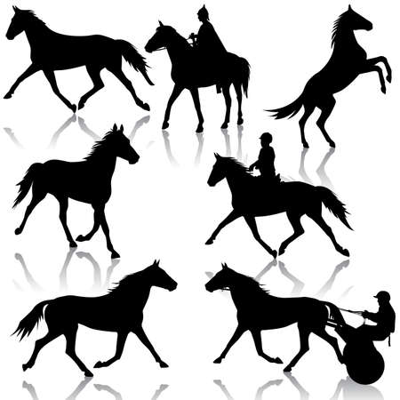thoroughbred horse: silhouette of horse and jockey