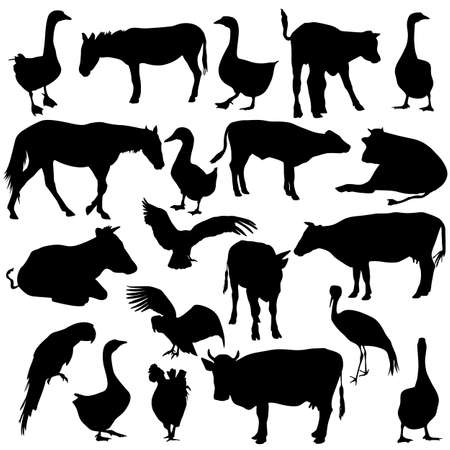 Black set silhouettes  zoo animals collection on white background. Vector illustration. Zdjęcie Seryjne - 26263881