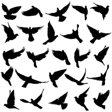 bandada pajaros: Conjunto de siluetas de palomas