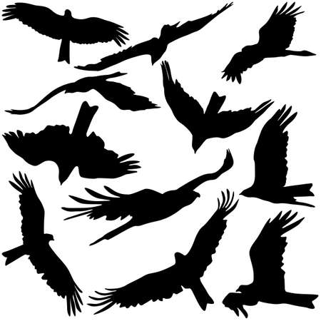Set black silhouettes of prey eagles on white background. Vector illustrations.