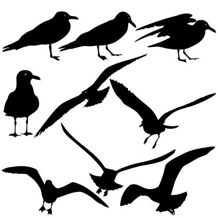 webbed: Set black silhouettes of seagulls on white background. Vector illustrations.
