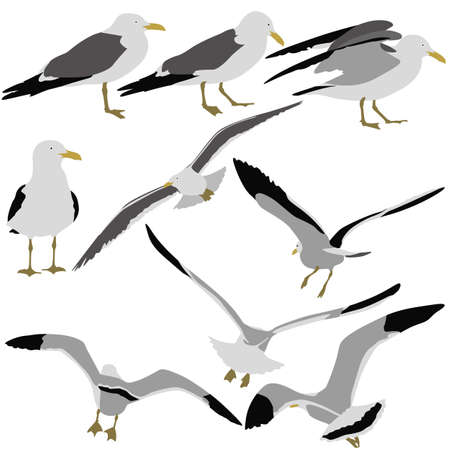 Set black silhouettes of seagulls on white background. Vector illustrations.