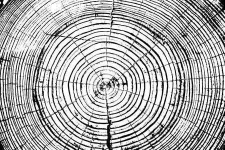 oak wood: Tree rings saw cut tree trunk background. Vector illustration.