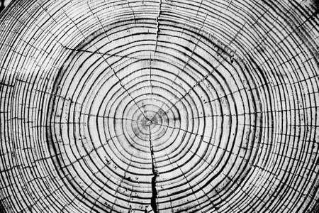 Anillos de los árboles cortados con sierra Fondo del tronco de árbol. Foto de archivo - 36782316